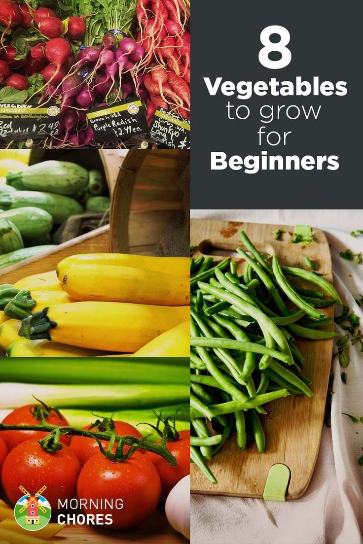 Growing your own vegetables can be intimidating for beginners. If you're a total newbie to gardening, plant these 8 easiest vegetables to grow.