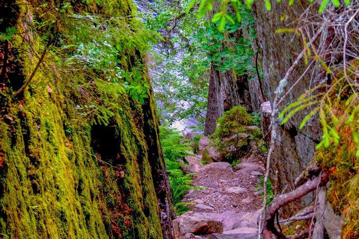 Kuljen metsässä hiljaa