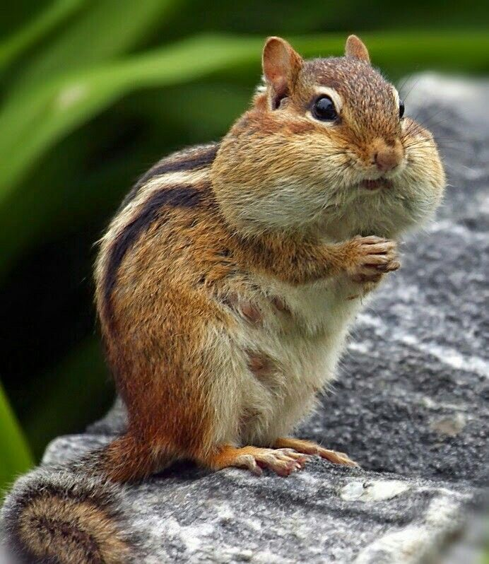 Image result for free blog pics of roque squirrels