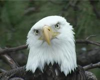 Stop the Removal of the Norfolk Botanical Garden Eagle Nest - The Petition Site
