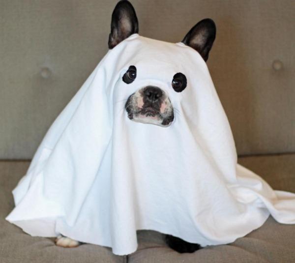 10 disfraces de Halloween para perros pequeños - ExpertoAnimal