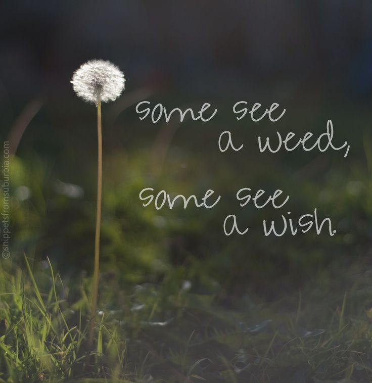 Some see a weed, some see a wish..think positive