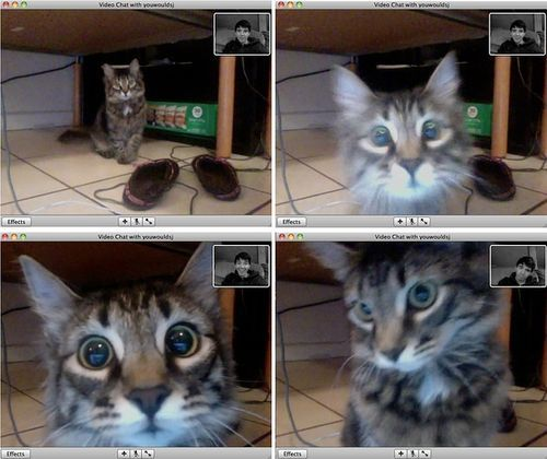 (curiosity,cat,photography,cute,funny): Crazy Cats, Cat Photography, Crazy Cat Lady