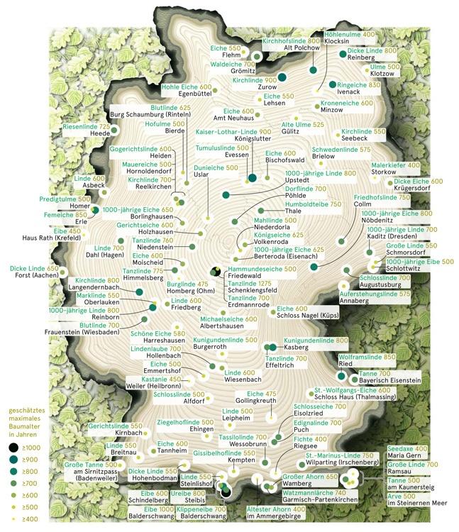 Alte Bäume in Deutschland, ZEITmagazin