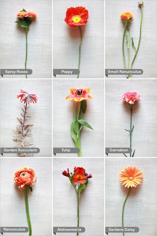Orange Wedding Flower Guide - Spray Roses, Poppies, Small Ranunculus, Garden Succulent, Tulip, Carnation, Ranunculus, Alstroemeria and Gerbera Daisy.