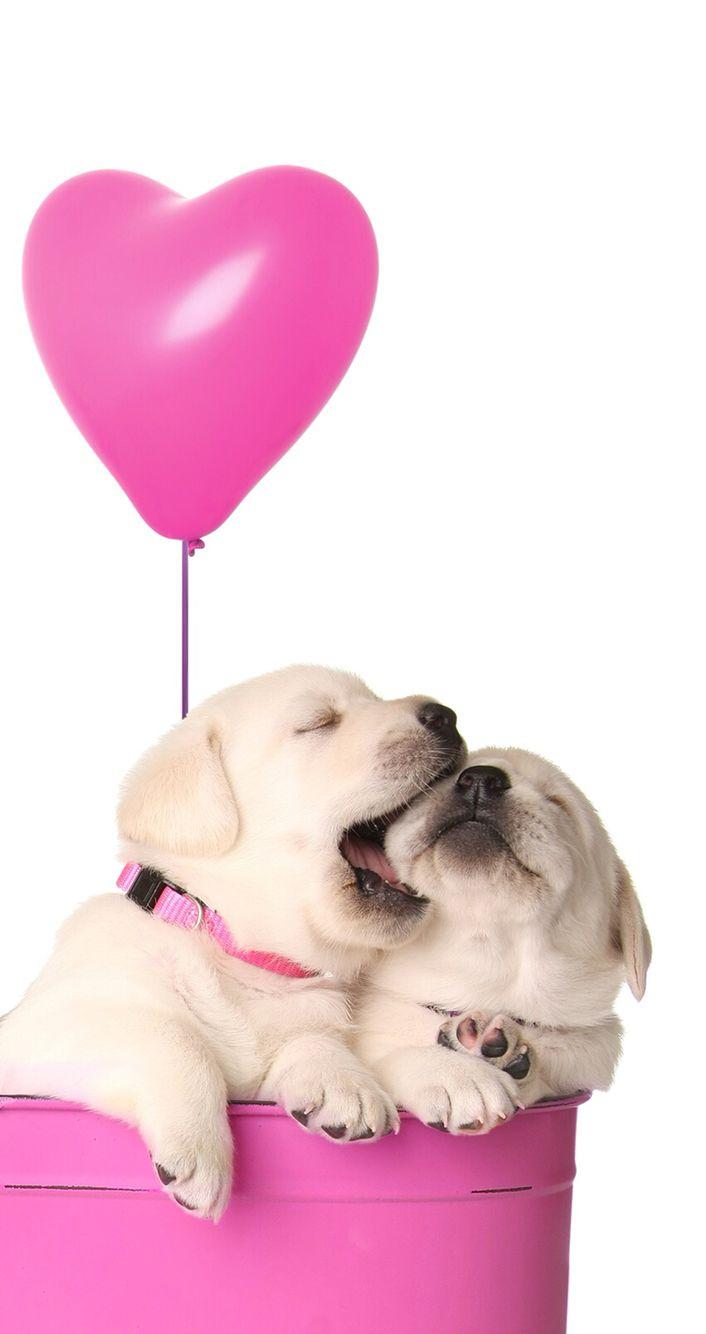 Puppies Valentine's wallpaper
