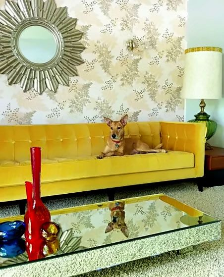 One Of The Few Things Iu0027m Keeping, My Luxe Yellow Velvet Sofa By