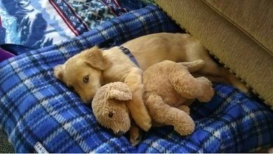 10 puppies who have a fluffy snuggle partner