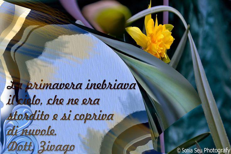 Lapislazzuli Blu: #Buona #Giornata #Umanità!