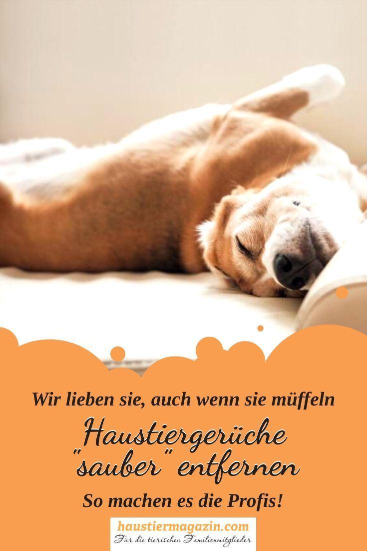Haustiergeruch In Der Wohnung Neutralisieren Hunde Geruch Tiere Und Haustiere Und Hundegesundheit