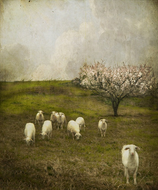 jamie heiden her finished images contain multiple photographic layers that are digitally manipulated