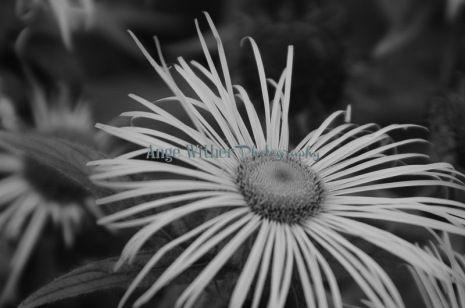 Big juicy flower