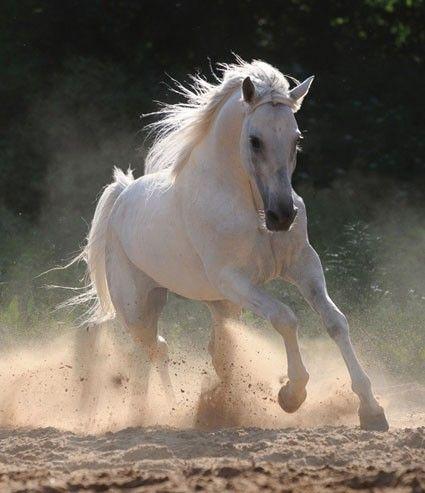 Dutch DigiWalls fotobehang art. 70065 Paard