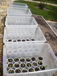 Inexpensive Mini Greenhouses - brilliant!