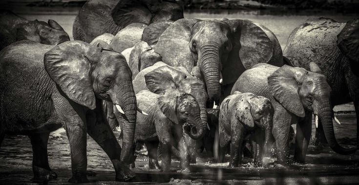 Family River Crossing by Chris Fischer on 500px