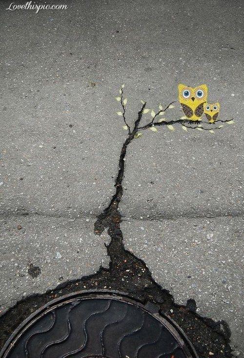 Coruja, calçada, rachadura, graffiti.
