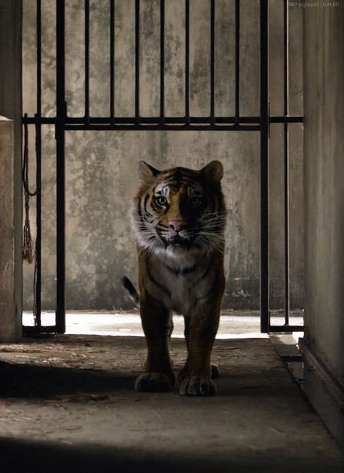 A Prayer for the Wild at Heart Kept in Cages!