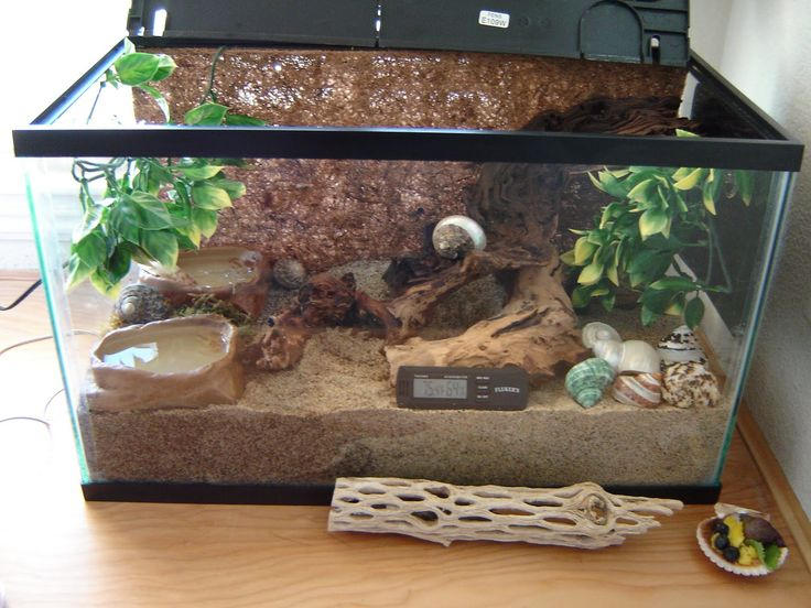 hermit crab tank Crabsville: A very crabby place.: How To Keep Your ...