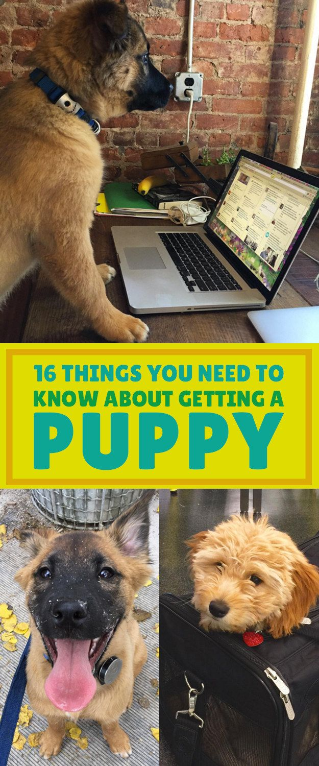 16 Things You Need To Know About Getting A Puppy