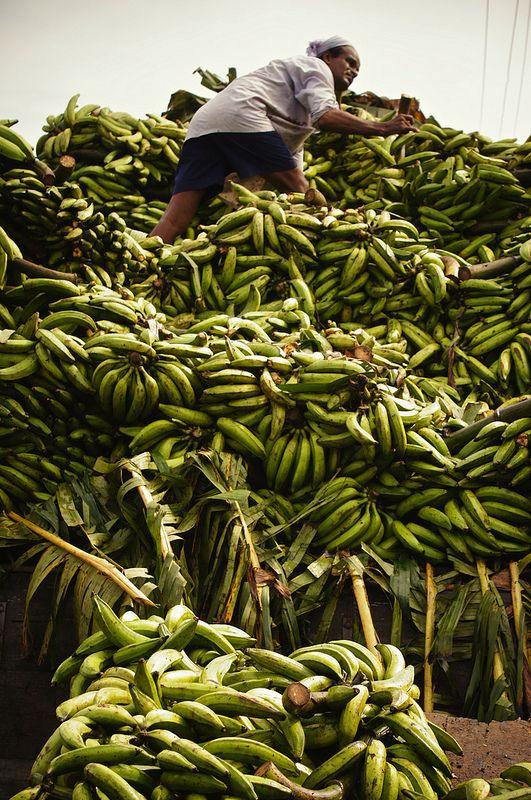Bananas, Thrissur, Kerala, India   Rajesh Pamnani, The Banana Story
