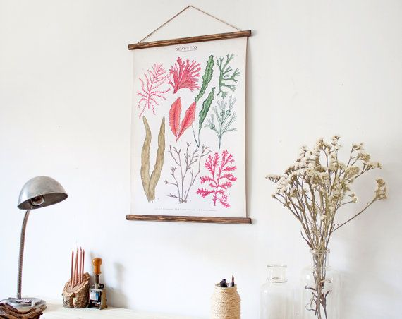 Seaweeds canvas poster  vintage educational chart by ARMINHO, $70.00  (for the laundry room!)