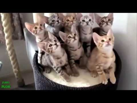 Cutest Cats on Earth