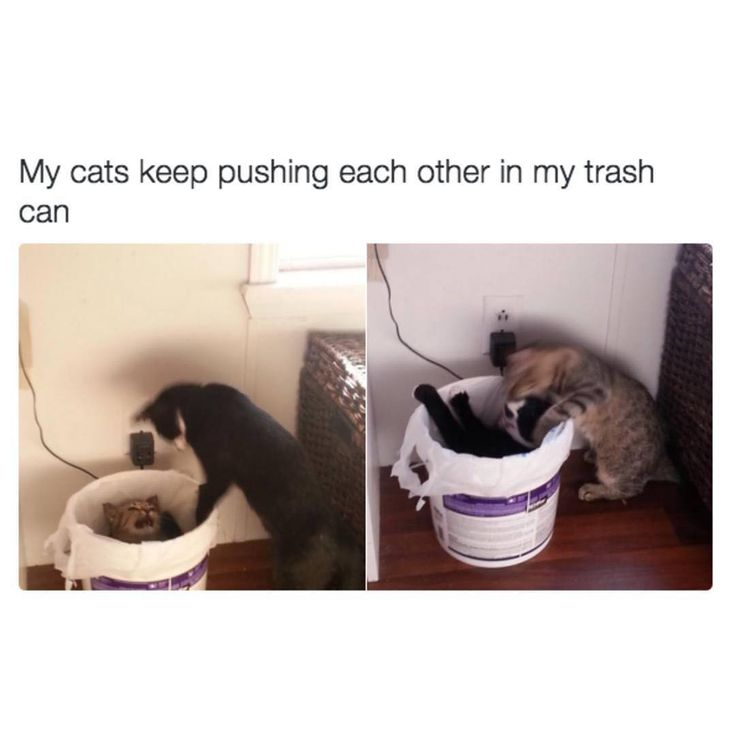 i'm the cat pushing the other one in the trash can like: friend: iM JUST SAYING I DONT LIKE (game/tv show/youtuber) ANYMORE me: NO YOU ARE THE ONLY ONE WHO GETS ME AND YOU WILL STAY WITH ME WHERE WE BELONG