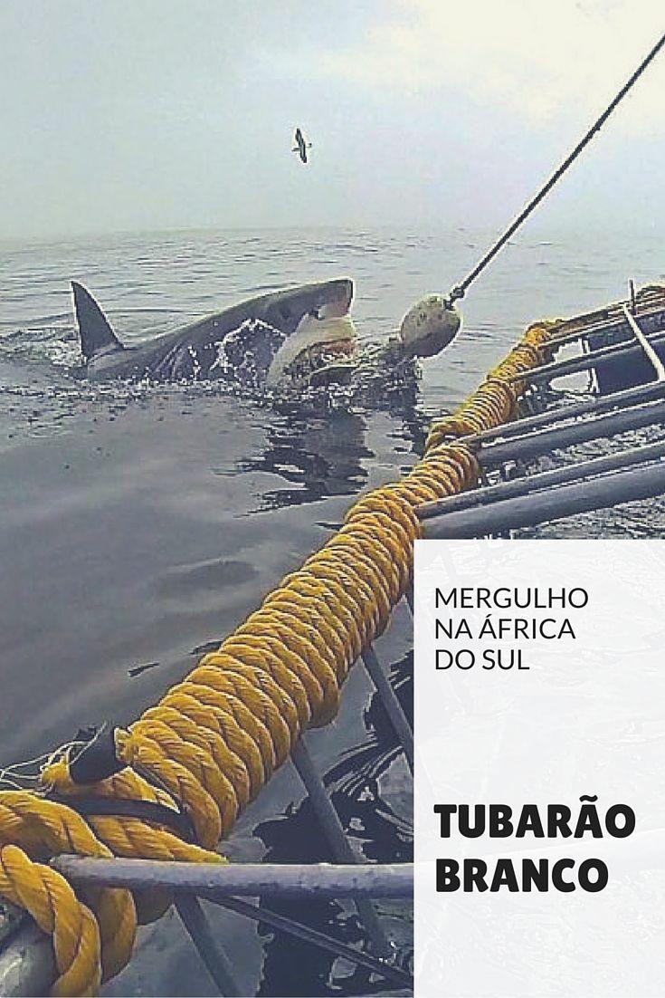 Se você vai pra África do Sul e gosta de aventura, saiba tudo sobre mergulho com tubarão branco.