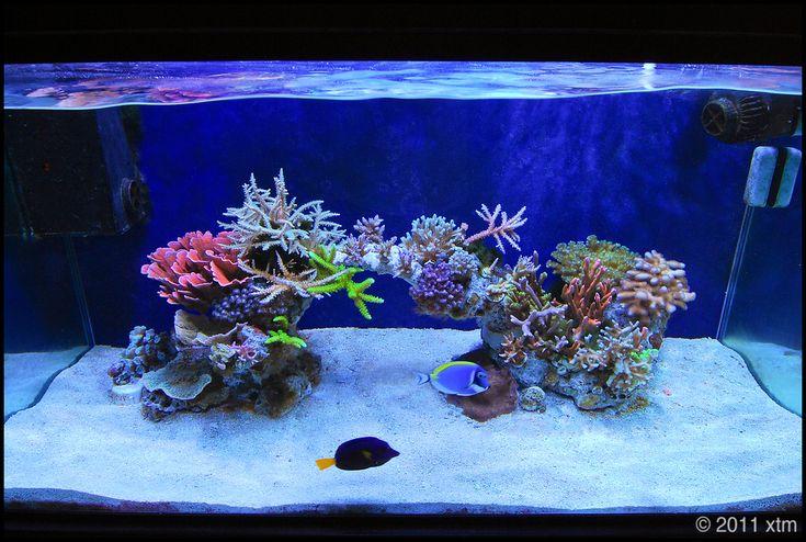 Minimalist aquascaping page 47 reef central online for Aquarium nano marin