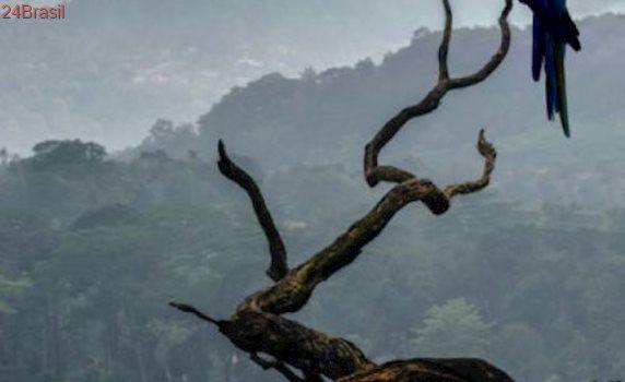Estudo revela que risco de extinção de diversas espécies é subestimado