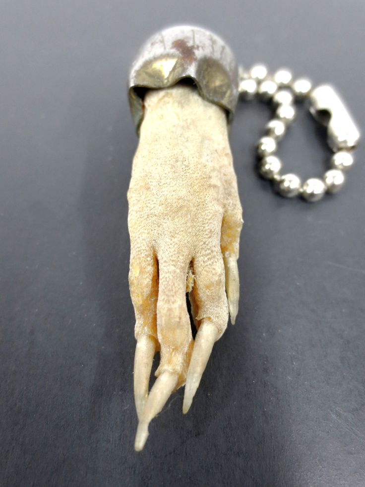 "Vintage Taxidermy Rat Paw Charm 1 3/4"" Long Nails, Creepy, Horror, Prop, Necklace"