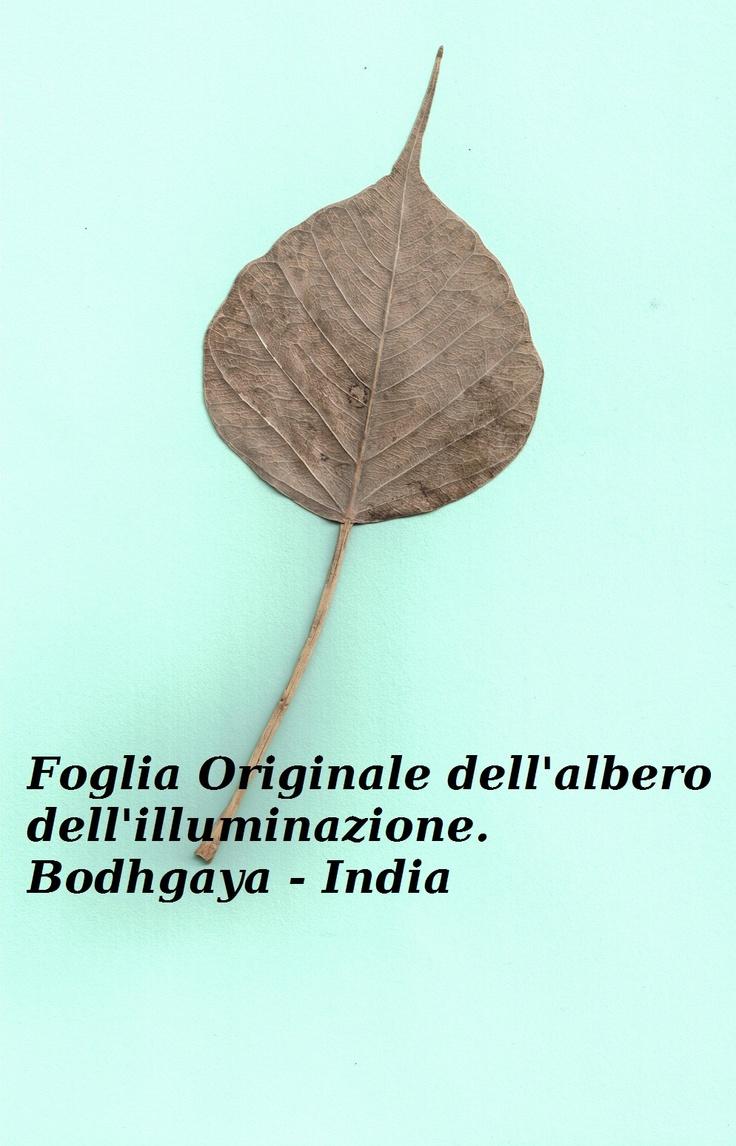 Foglia originale dell'albero dell'illuminazione - Bodhgaya - India