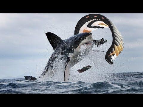 342 best images about SHARK ATTACKS, SHARKS on Pinterest ...