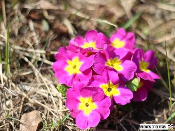 Hyvää Floran päivää!