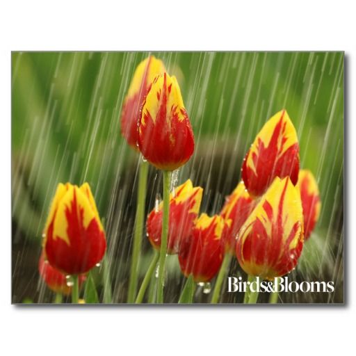 168 best exclusive coupon code vip membership 70 images on spring tulips postcard fandeluxe Gallery