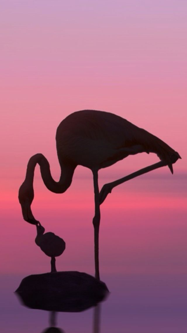 Pink Flamingo in Florida Sunset #Luxurydotcom#Luxurydotcom My top pins