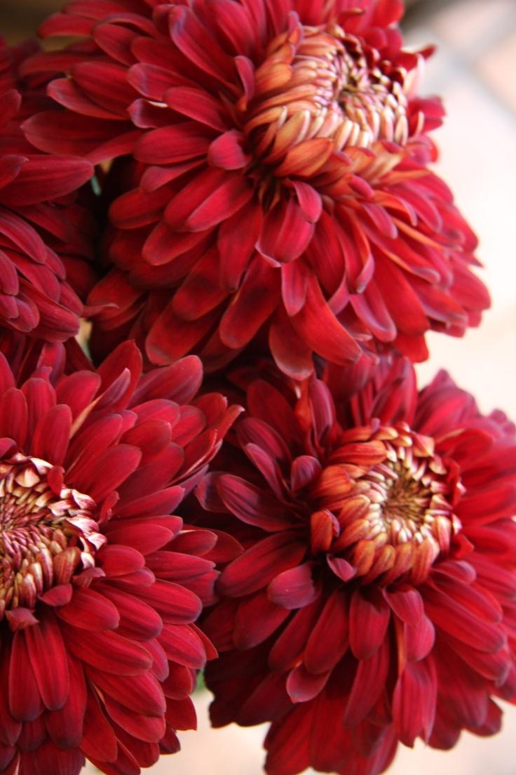 best watercolour flowers images on pinterest pretty flowers