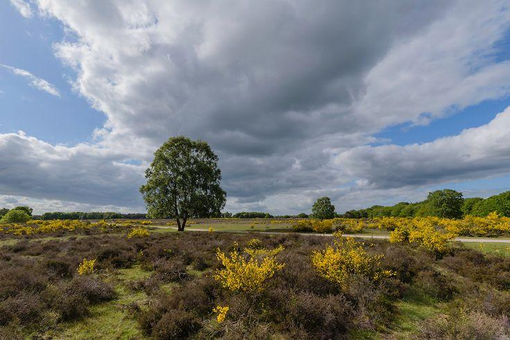 Foto 146 #Westerheide, Laren, Noord Holland, Netherlands #iederedagfoto