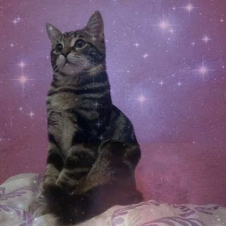 """Maia the Cat. Maia """"Devota Alle Pleiadi"""" (""""Devoted to the Pleiades""""), the female cat of DJoNemesis, is the reincarnation of Lilly """"Sacra d'Orione"""" (""""Sacred from Orion"""", his previous cat): she inspires him in his art.  Lilly went back to Orion's Belt in 2015 and in 2016 she reincarnated descending from the Pleiades."""