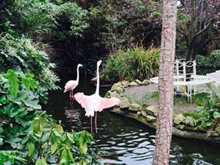Bond with the flamingos at the Roof Gardens. | 17 Things You Must Do When The Weather's Nice In London