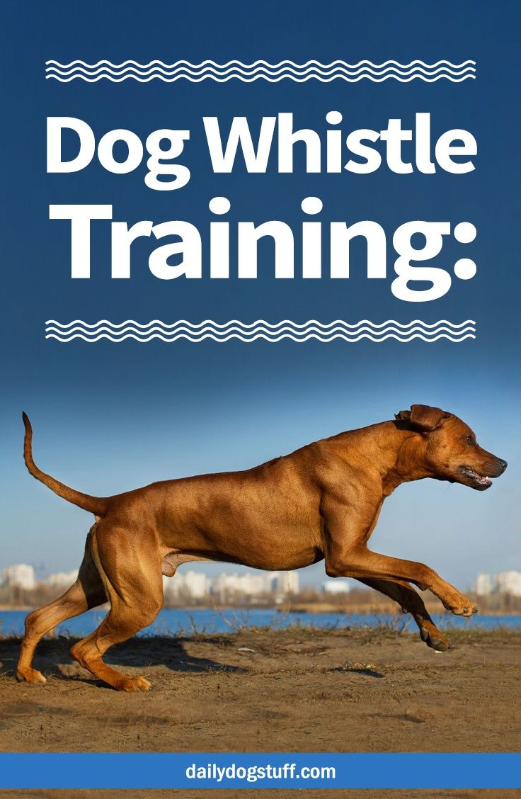Dog Whistle Training When To Use It How To Get A Dog To Listen