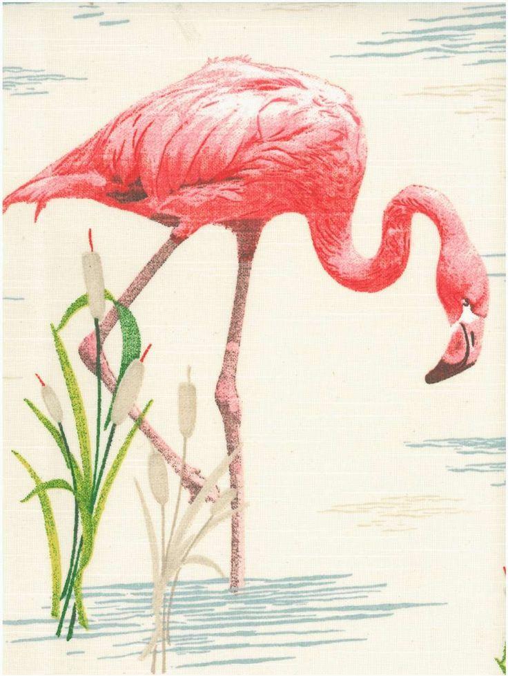 Flamingo!                                                                                                                                                                                 More