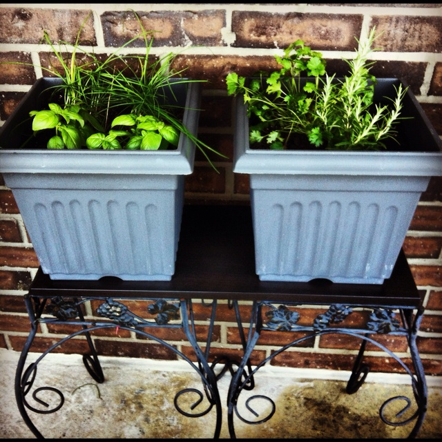 Simple herb garden for apartment living: Apartment Gardens, Apartment Living, Herbs Garden, Inspiration Apartment