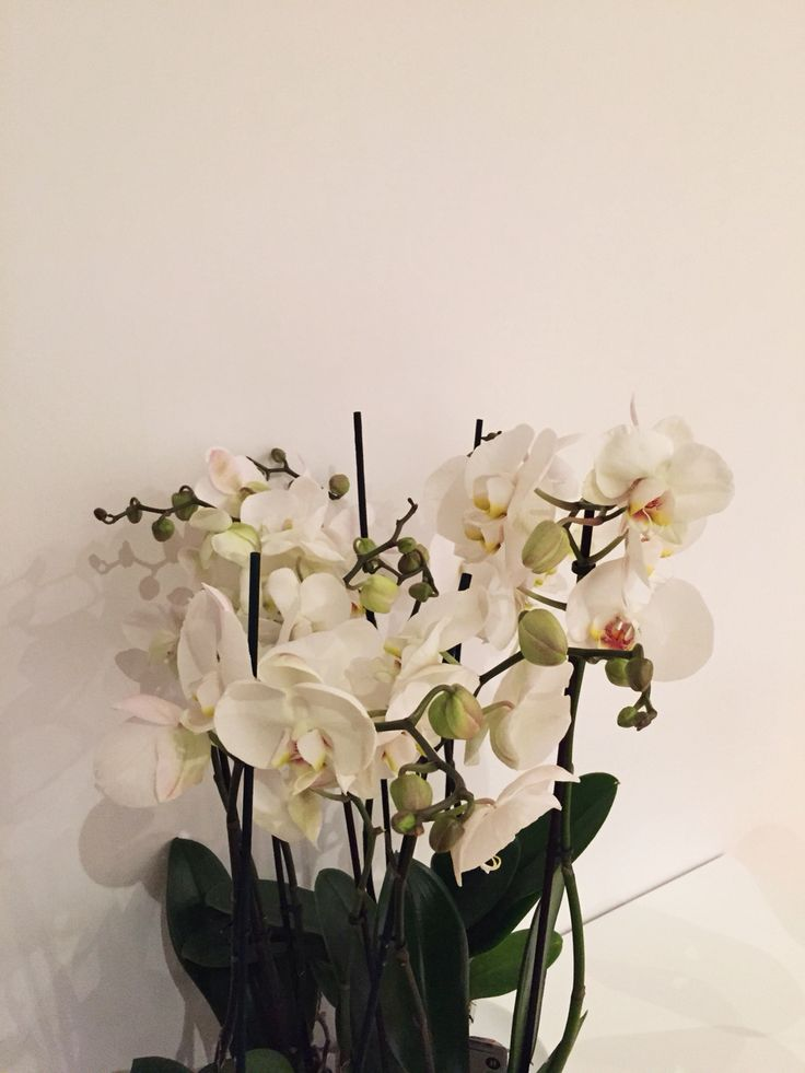 Flowers, orkids,
