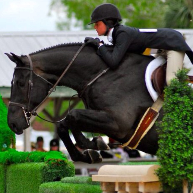 Black horses jumping - photo#10