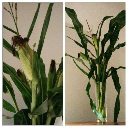 Corn inside