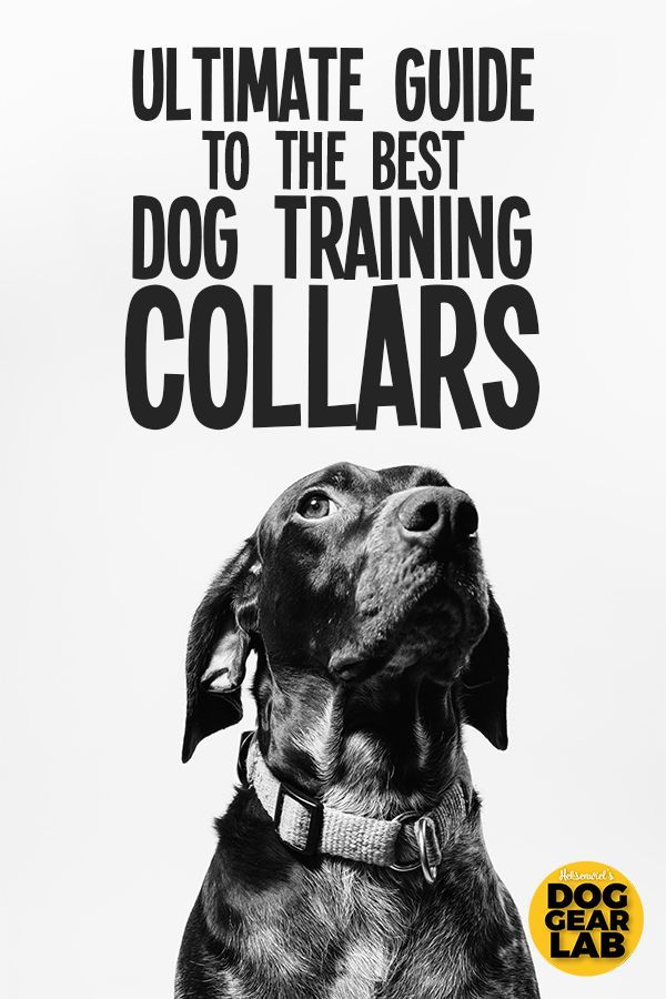 Ultimate Guide To The Best Dog Training Collars Best Dog