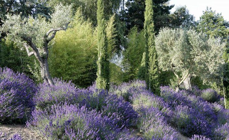 Täuschend echt: Die Doppelgänger mediterraner Pflanzen
