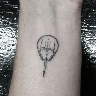 horseshoe crab tattoo - Google Search