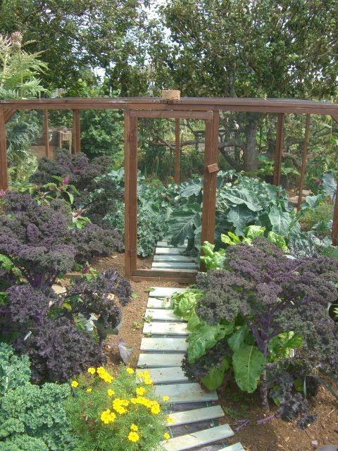 Diy Vegetable Garden Enclosure